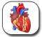 تصوير الأوعية التاجية - Cardiac Catheterization - Coronary Angiography